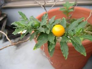 orangeball2